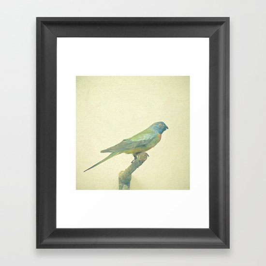 Bird Study #3 Framed Art Print