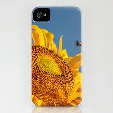 Mr. Yellow Britches iPhone (4, 4s) Slim Case