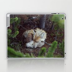 Sleeping Fox Laptop & iPad Skin