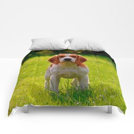beagle puppy on guard Comforters