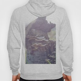 Magic Tree Hoody