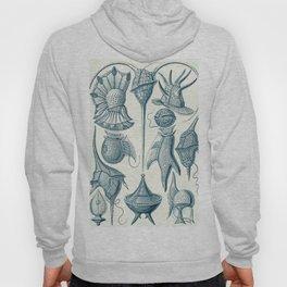 Ernst Haeckel Peridinea Plankton Hoody
