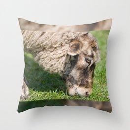 Single adult sheep eating grass Throw Pillow