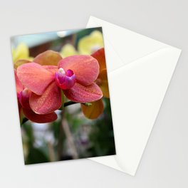 Bright Ballet Stationery Cards