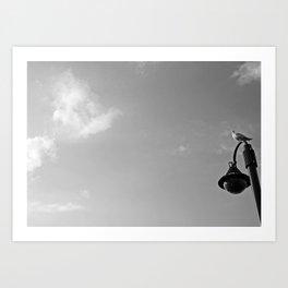 Seagull on lantern Art Print