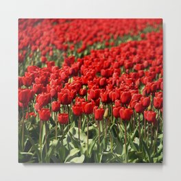 Tulips field #4 Metal Print