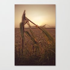 maíz Canvas Print
