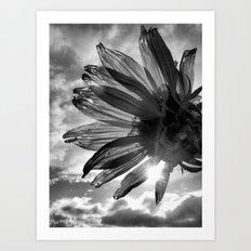 The Sun's Flower Art Print