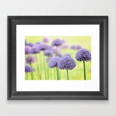 Allium dreams Framed Art Print