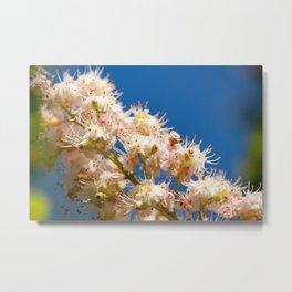 Macro of blooming Aesculus Metal Print
