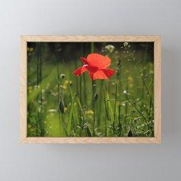 Poppy Flower Nature Wild Framed Mini Art Print