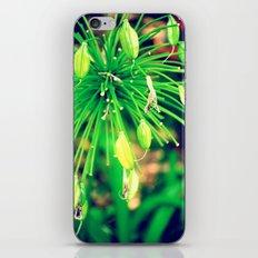 PurpleFlowers iPhone & iPod Skin