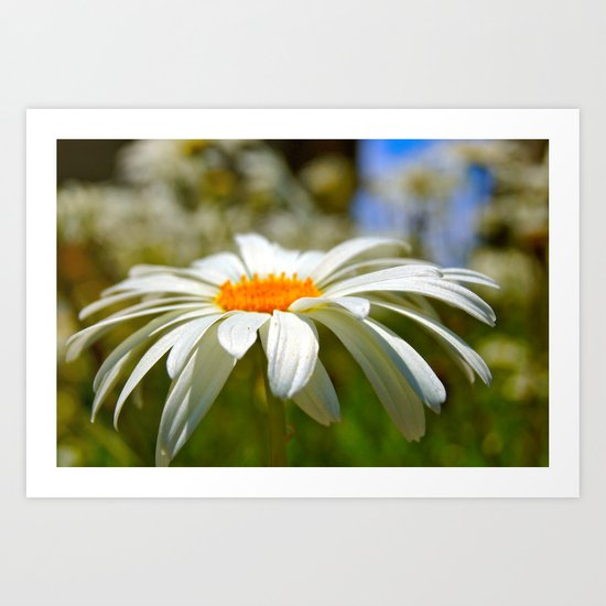 Daisy in Santa Cruz Art Print