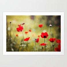Wild Anemones Art Print