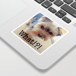 Yorkie | Dogs | Terrier | Pets | Humor | What!?! (with text) Sticker