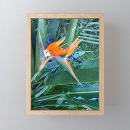 Birds of paradise Framed Mini Art Print