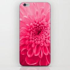 Chrysanthemum pink iPhone & iPod Skin