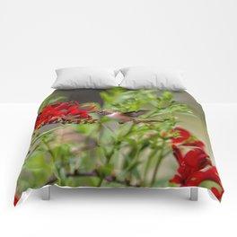 Rufous Hummingbird Feeding, No. 2 Comforters