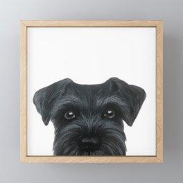 Black Schnauzer, Dog illustration original painting print Framed Mini Art Print