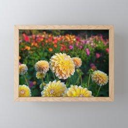 Happier Dahlias Framed Mini Art Print