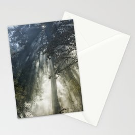 Smoke and Sun Filtered Through a Fir Tree Stationery Cards