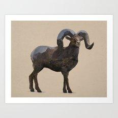 The Rocky Mountain Bighorn Sheep Art Print