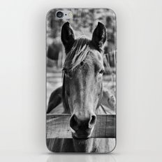 Waiting (Black and White Horse #1)  iPhone & iPod Skin