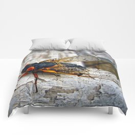 Red Eyed Cicada Comforters