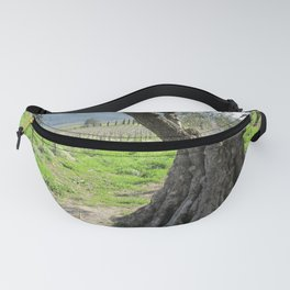 Olive tree in vineyard Fanny Pack