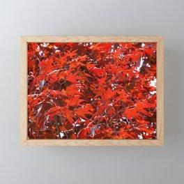 Japanese Red Maple Leaves Framed Mini Art Print