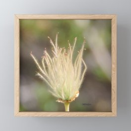 Apache Plume Framed Mini Art Print