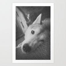 Husky 2 Art Print