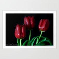 Smooth Tulips  Art Print