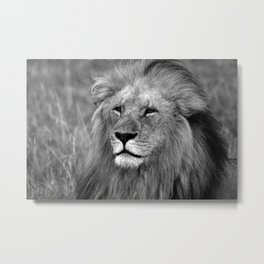 Masai Mara Lion Metal Print