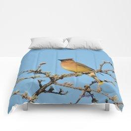 Cedar Waxwing Faces Sunset Comforters