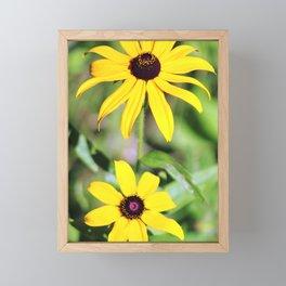 Brown Eyed Susan in Horicon Marsh in Wisconsin Framed Mini Art Print