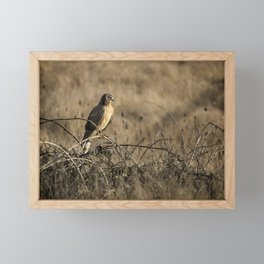 Northern Harrier at William L Finley Framed Mini Art Print