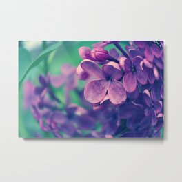 Lilacs Daydreams Metal Print