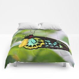 Goliath Birdwing Comforters
