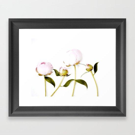 Peony Bulbs Framed Art Print