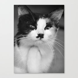 Thoughtful Kitty Canvas Print