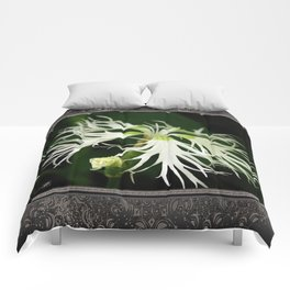 Dianthus named Superbus White Comforters