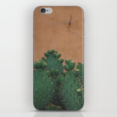 Route 66 Prickly Pears iPhone & iPod Skin