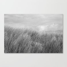 Beach grass - black and white Canvas Print