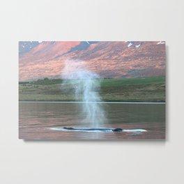 Breath of a humpback whale Metal Print
