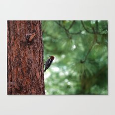 Red-naped Woodpecker Canvas Print