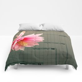 A Chart Topper Comforters