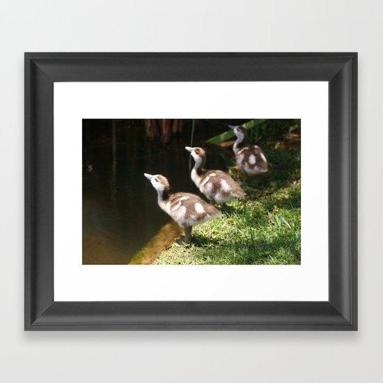Three Little Ducklings Framed Art Print