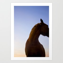 Horse at Sunset Art Print