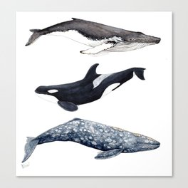 Orca, humpback and grey whales Canvas Print